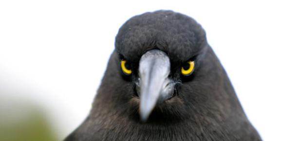 Günde 200 Milyon Dakika Angry Birds Oynanıyor