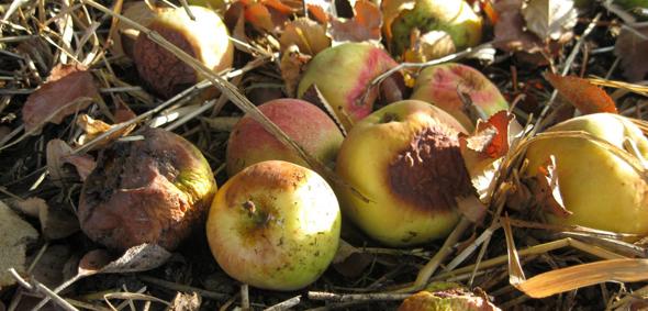 Greenpeace'e Göre En Kirlisi Apple