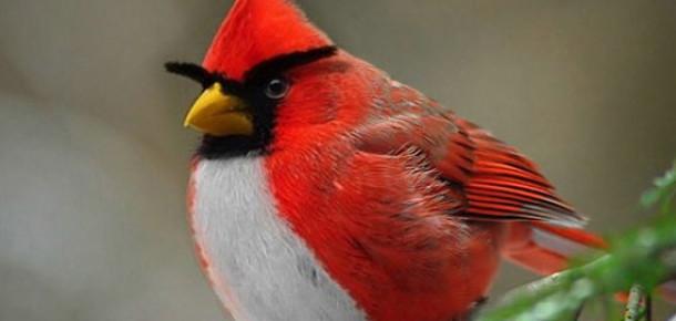 Angry Birds Gerçek Oldu!