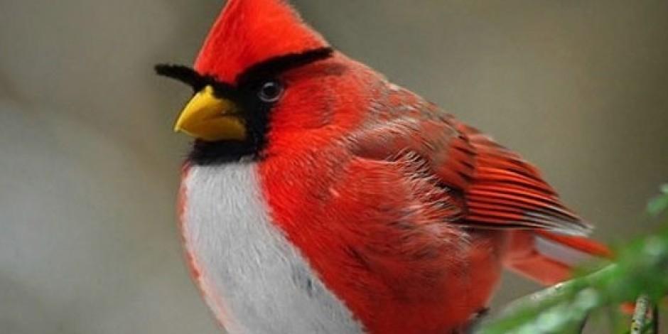 Angry Birds Her Gün 300 Milyon Dakika Oynanıyor