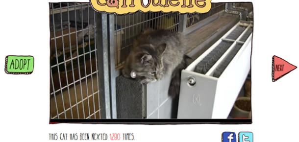 Chatroulette'in Kedi Versiyonu: Catroulette