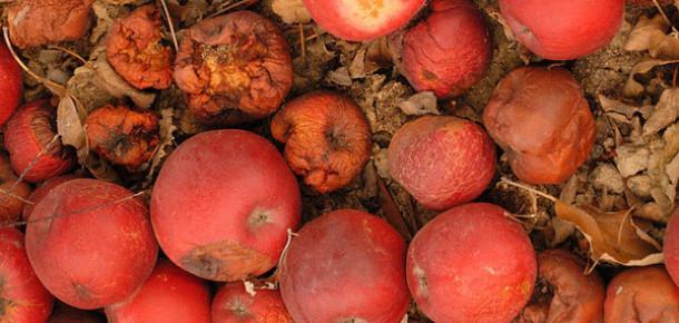 Apple Hisselerinin Yaşadığı Düşüş ve Sebepleri