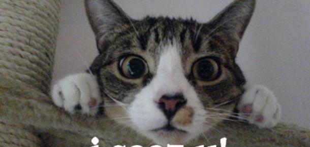 Twitter Artık Kedi Dilinde Konuşabiliyor
