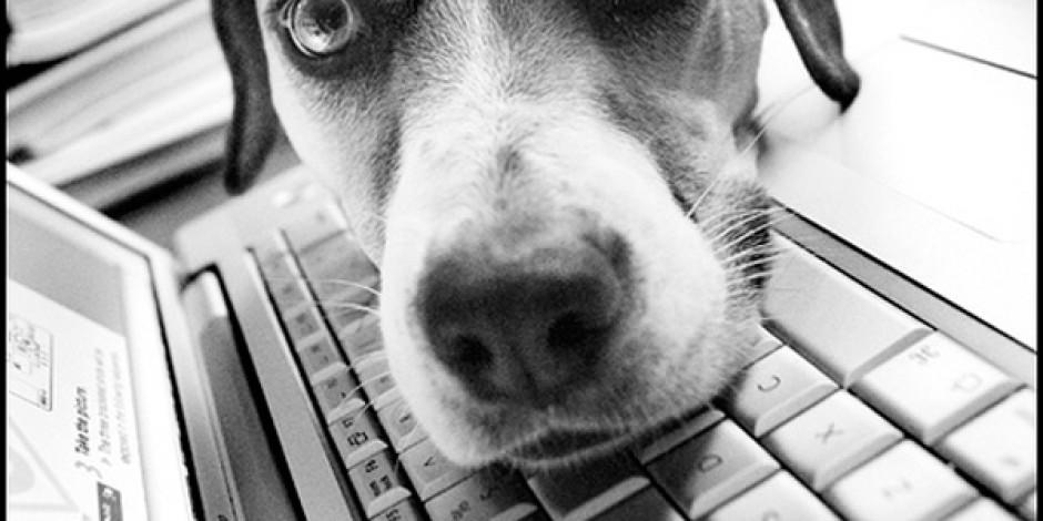 My Social Petwork: Hayvanlar İçin Sosyal Ağ