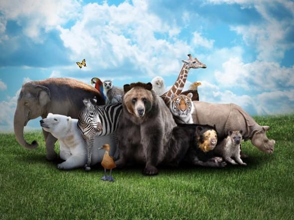 Nesli Tükenmekte Olan Canlıları Korumak İçin Groupon ve WWF'den Anlamlı Kampanya