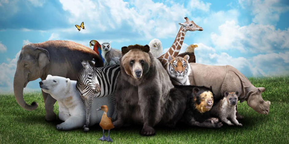 Groupon ve WWF'den Canlıları Koruma Kampanyası