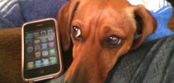 Evcil Hayvanlar Yılda 3 Milyar Dolarlık Elektronik Hasara Neden Oluyor