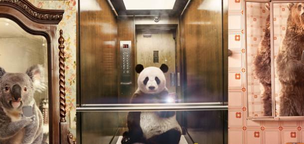 National Geographic Yeni Kampanyasında Hayvan Selfie'lerini Kullanıyor