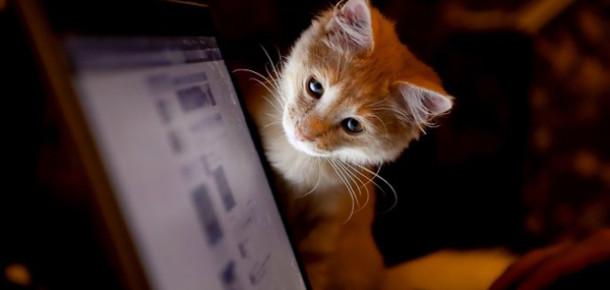 Twitter Tüyoları: Paylaşımınız için en ilgi çekici tweet'i nasıl oluşturabilirsiniz?