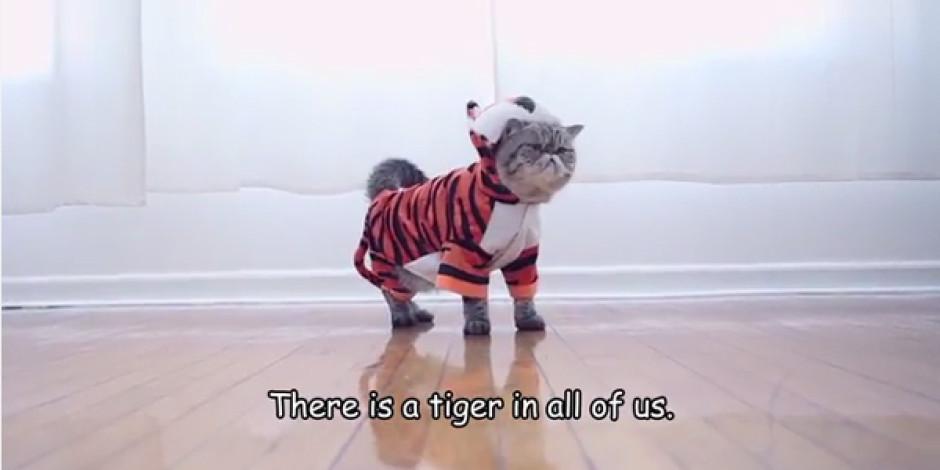 İnternetin ünlü kedileri bu kez ataları kaplanların neslini koruyor: #CatsSaveTigers