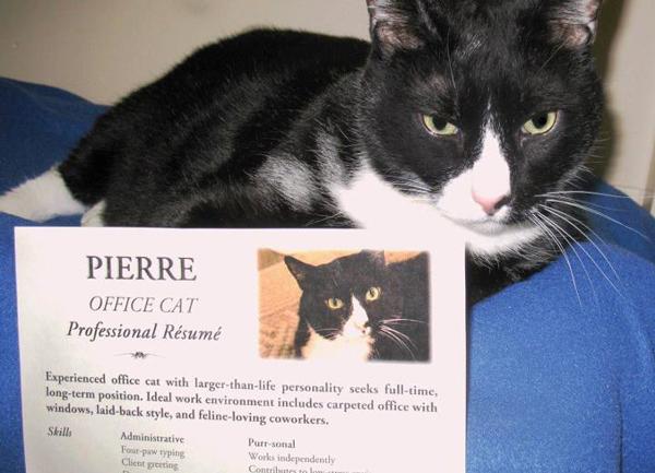 pierre-cat-looking-for-job