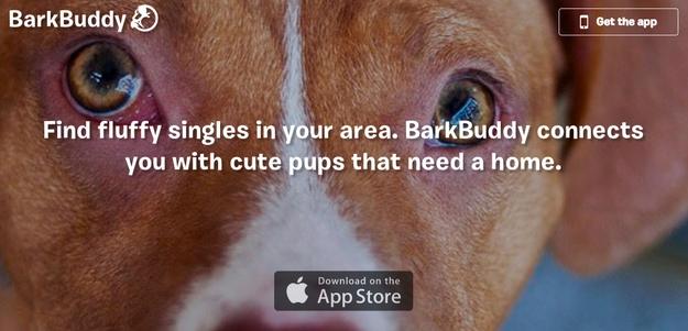 barkbuddy