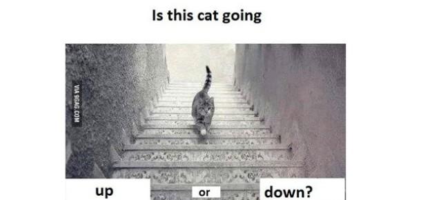 Sosyal medyanın gündemi: Kedi iniyor mu?, çıkıyor mu?