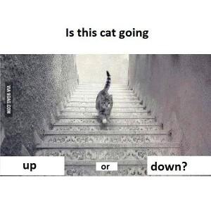 kedi, the cat