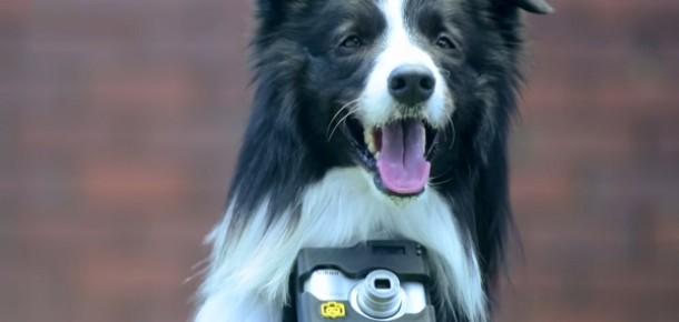 Kalp atışları hızlandığında fotoğraf çeken köpek: Phodographer