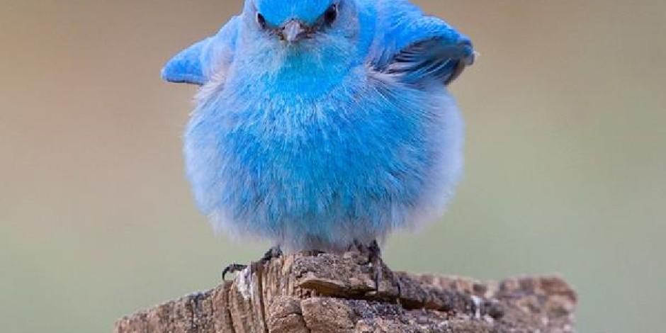 Twitter alemi benden sorulur diyenlerin aşık olacağı 10 servis