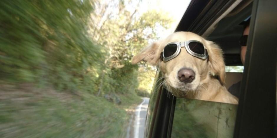 Bir köpeği ne kadar iyi tanıyorsunuz?