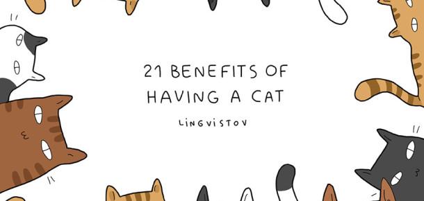 Kedi sahibi olmanın 21 avantajı
