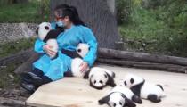 Dünyanın en iyi işi: 32 bin dolar karşılığında pandalara sarılın