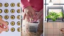IKEA yeni iç mekan bahçeciliği serisini tanıttı