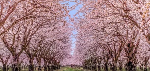 Baharın en güzel şekilde yaşandığı 15 bölge
