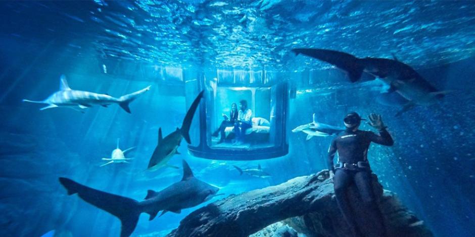 Airbnb, şanslı kullanıcılarına köpek balıklarıyla bir gece hediye ediyor