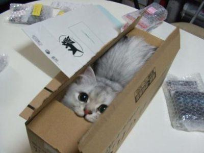 cat-in-a-box-big