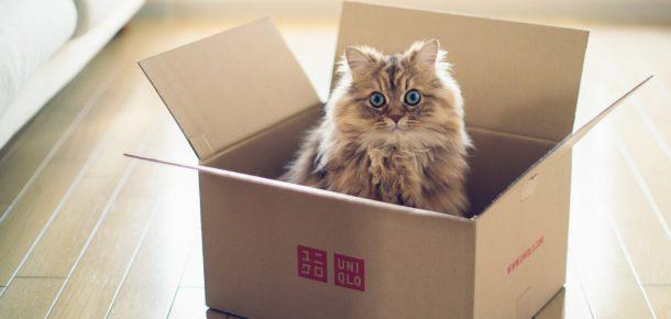 Kediler kutuları neden sever?