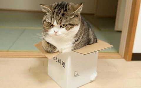 maru_the_cat__3188629b