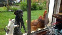 İçeri girme konusunda kararlı olan 25 hayvan
