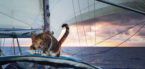 İşini bırakıp dünyayı kurtardığı kediyle birlikte gezen kadın
