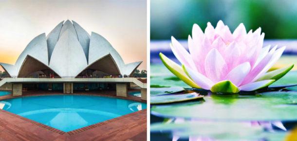 Doğadan ilham alan 10 mimari