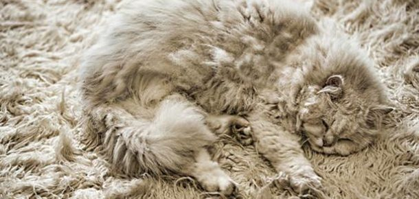 Kamuflaj boyutlarını aşan 14 kedi