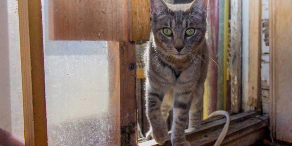 Kedi takip dedektörünün elde ettiği sürpriz sonuçlar