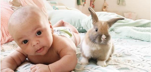Sevimlilik sınırlarını aşan bebek ve tavşanlar