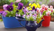 Evinizde minik bir bahçe yapmak için 18 yol