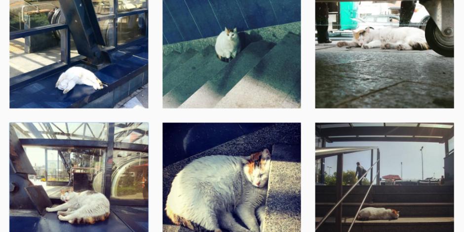 Metroda sevimli bir kedi: @leventmetrosununuyuyankedisi
