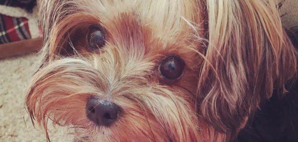 Herkesin bir köpeği olması gerektiğini kanıtlayan 25 fotoğraf