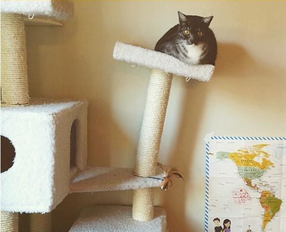 kedi18