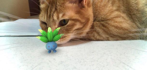 Hayvanların pokémonları görebildiğini kanıtlayan 33 fotoğraf