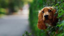 Yoldan geçenlere selam vermeden duramayan 50 köpek