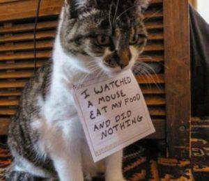 Kedinizi affetmeniz gereken 15 durum