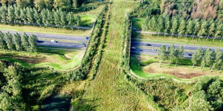 Hollanda'nın geleceğin ülkesi olduğunu kanıtlayan 7 gerçek
