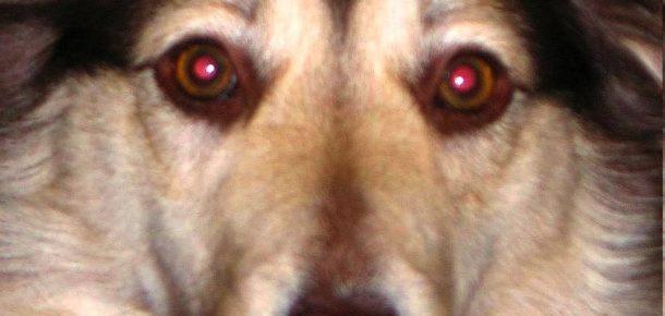 Fotoğraflarda kırmızı gözlü çıkmanızın sebebi nedir?