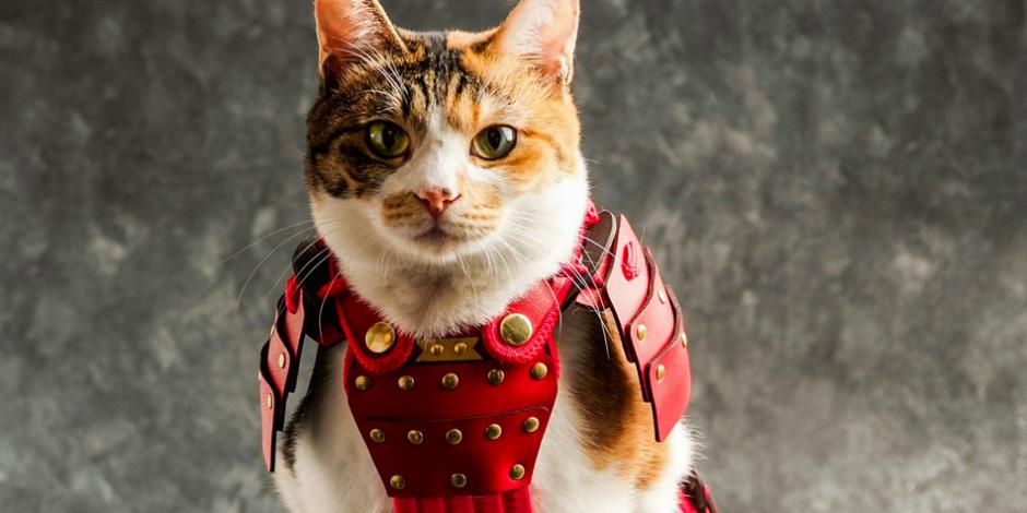 Evcil hayvanlarınız için samuray zırhı bugün görebileceğiniz en eğlenceli şey